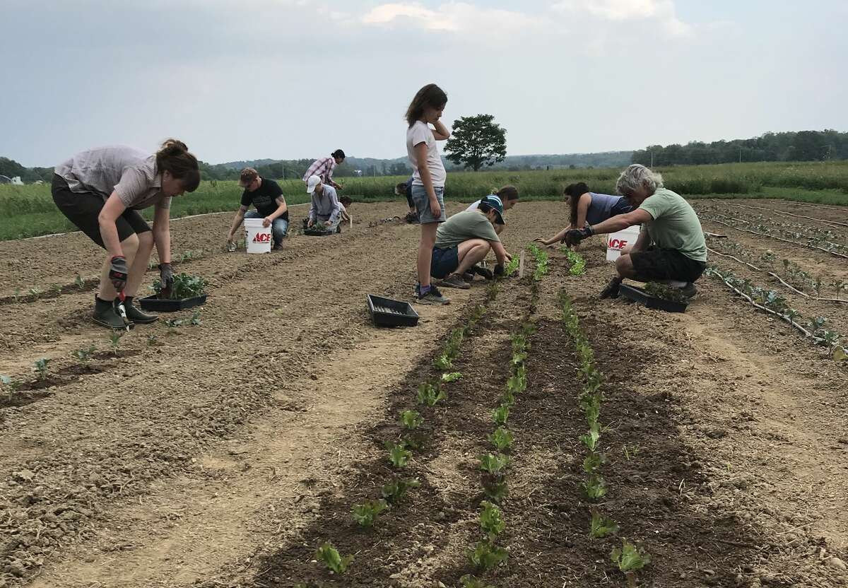 Volunteers plant the field that will grow organic produce for Red Hook Responds.