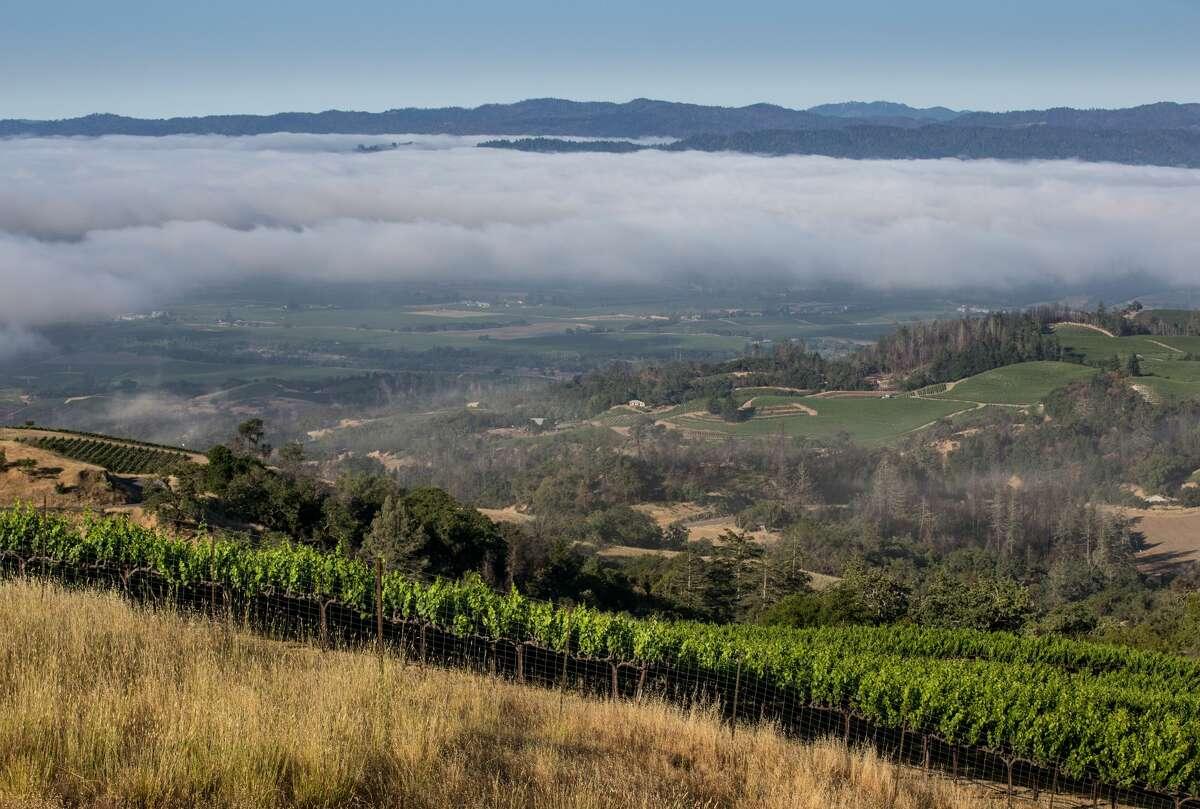 Fog burns off in the valley below a hillside cabernet sauvignon vineyard along Geysers Road on June 3, 2021, near Healdsburg, Calif.
