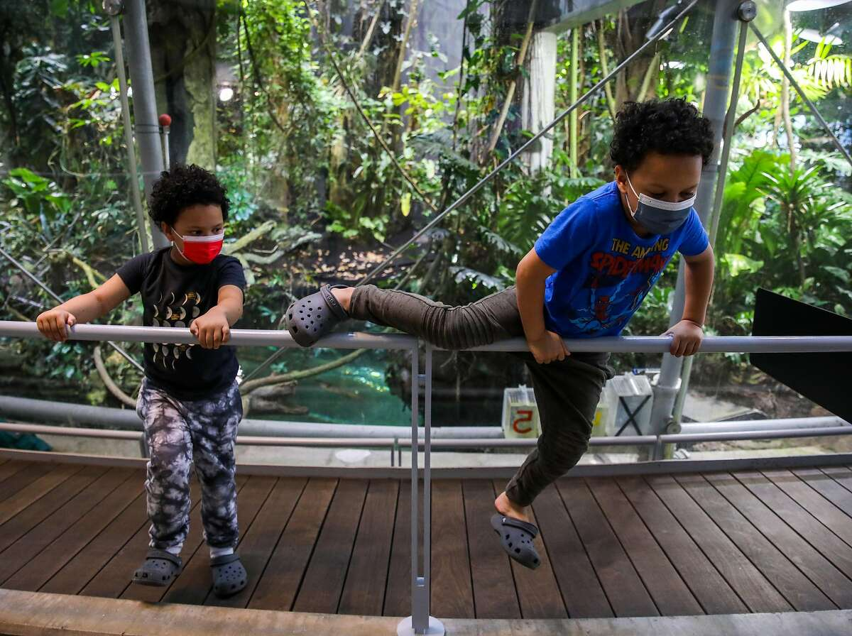 Five-year-old twins Jaxon Mcneally, left, and Jonah Mcneally, of Daly City, hang out at the Rainforest exhibit as they visit the California Academy of Sciences with their parents and baby brother on June 10, 2021, in San Francisco.