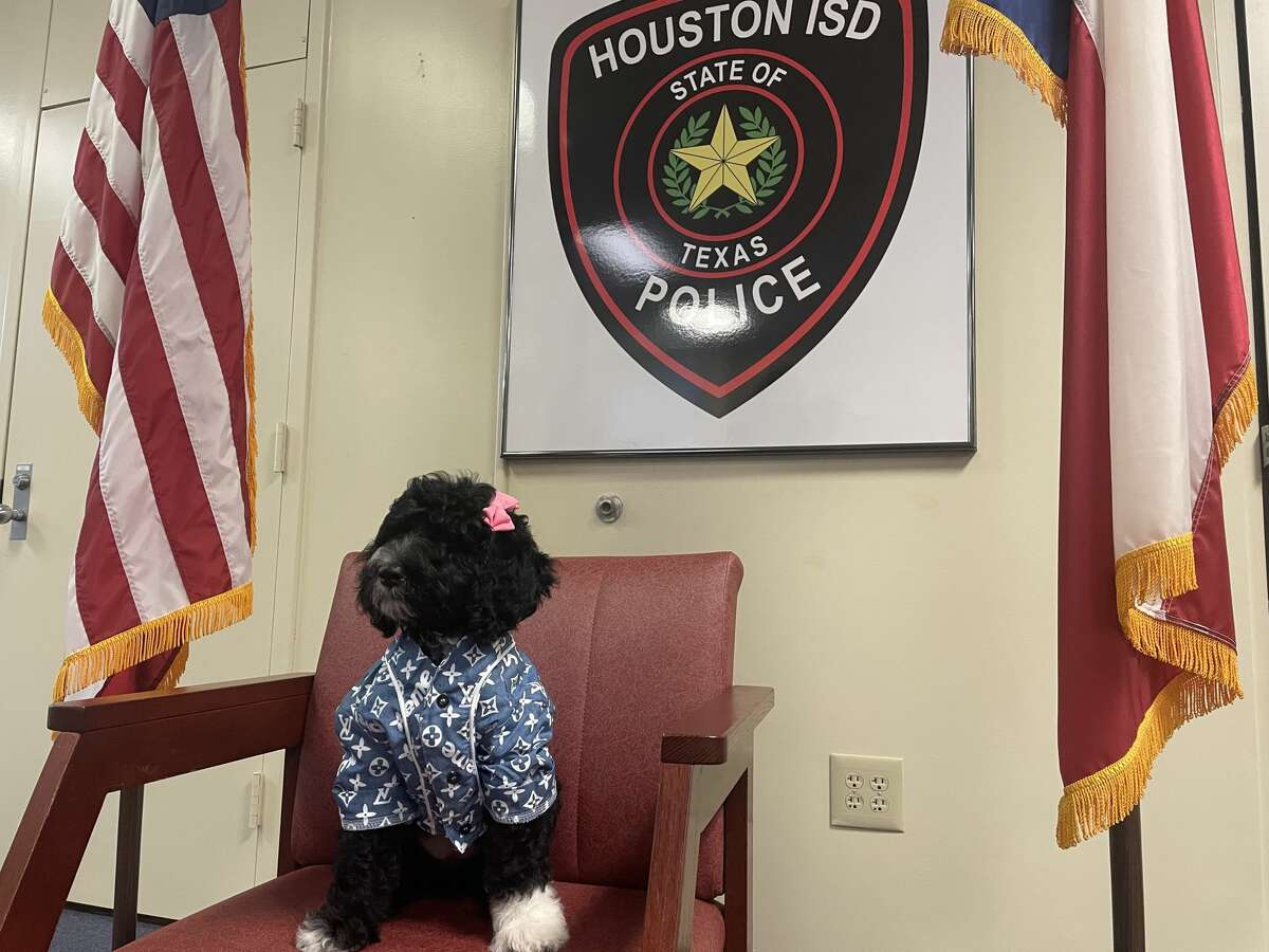 Meet Jamaica, the new comfort dog at the Houston ISD Police Department.