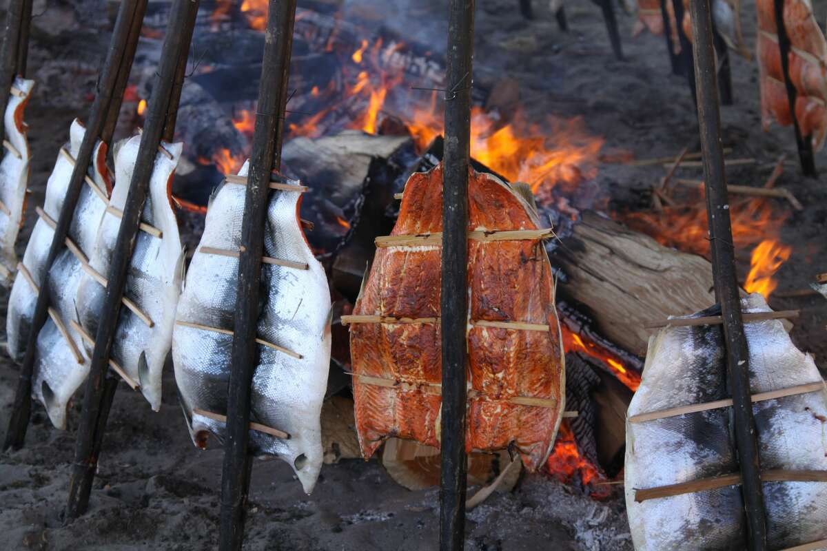 Salmon baking by an alder fire the Native American way