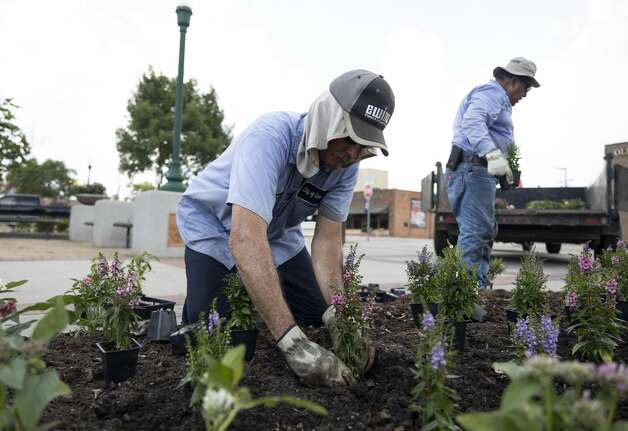 John David Sapp, left and Jacob Taboada with the City of Conroe, plant seasonal flowers at the Conroe Founder's Plaza, Tuesday, June 15 ,2021, in downtown Conroe. Photo: Gustavo Huerta/Staff Photographer / Houston Chronicle © 2021