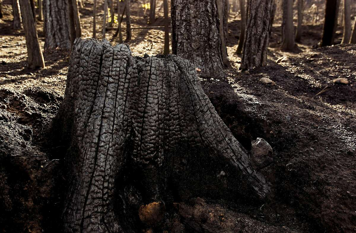 Wildfires are the biggest cause of tree cover loss in California.