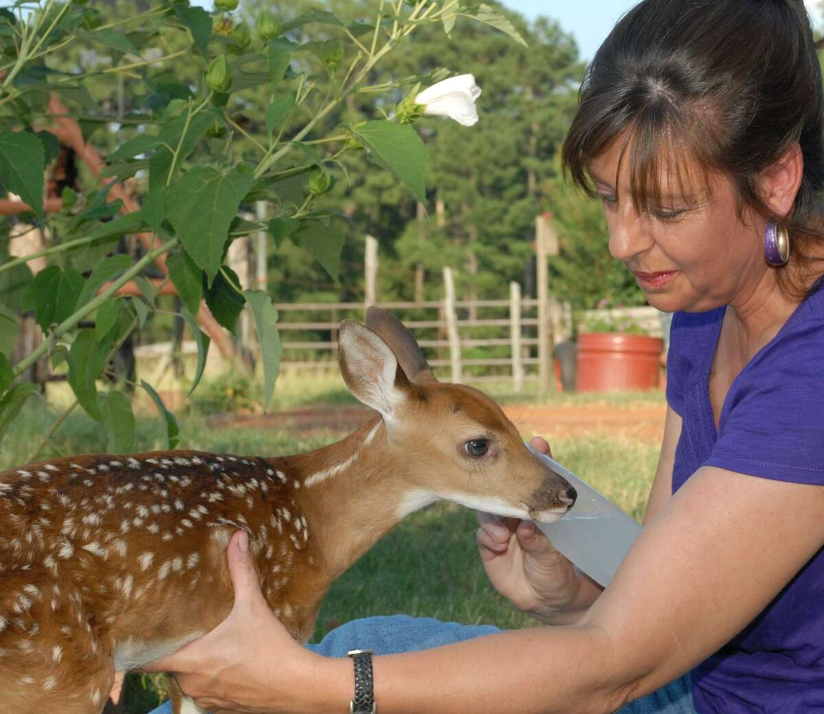 Each year, hundreds of perfectly healthy fawns wrongfully plucked from the wild by well-meaning individuals are referred to volunteer wildlife rehabilitators who are already strapped for time, and funds, tending injured animals in need of help.