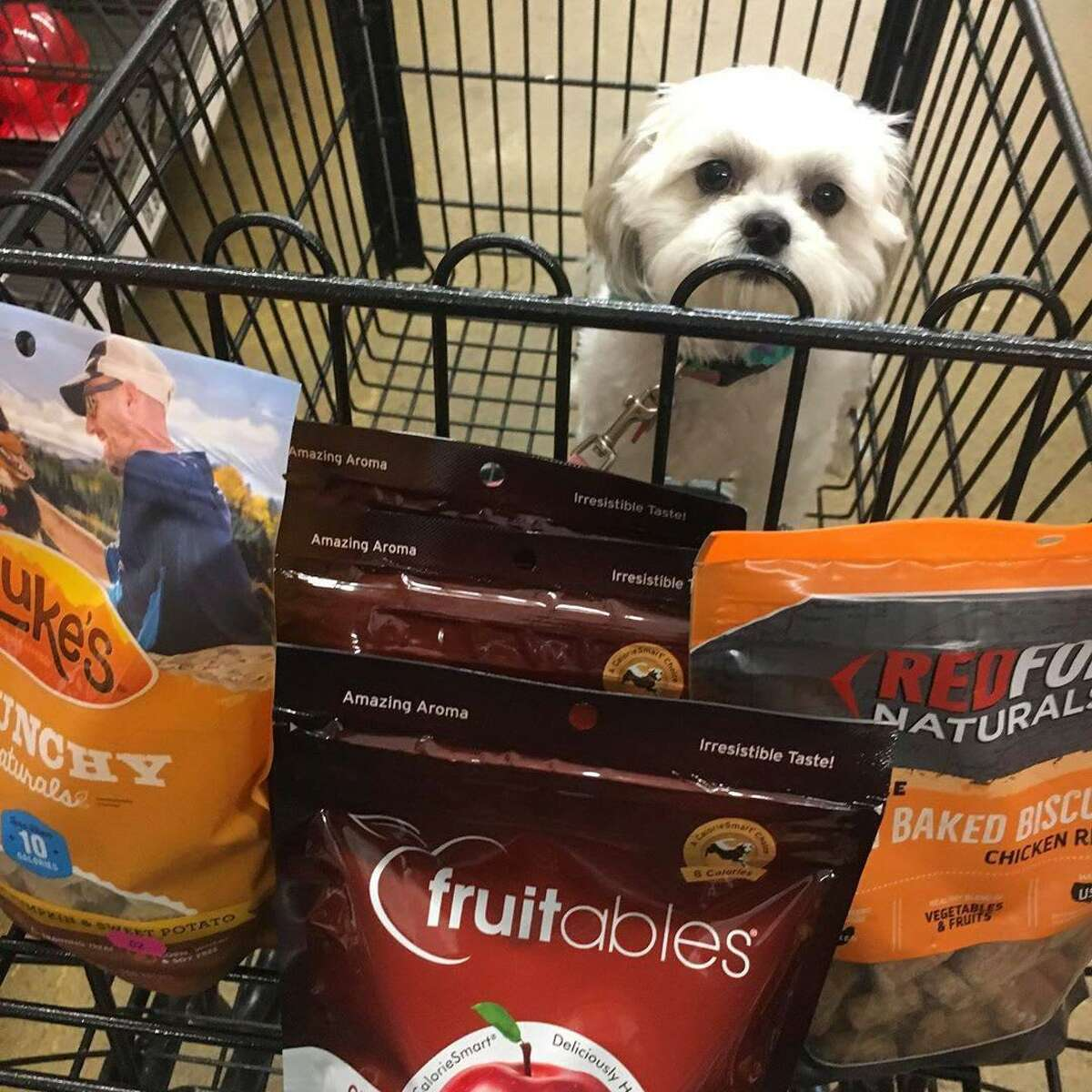 The new Pet Supplies Plus store in Friendswood carries major brands in food, toys, beds, leashes, bowls, aquariums, natural and organic food options. It also offers grooming services.