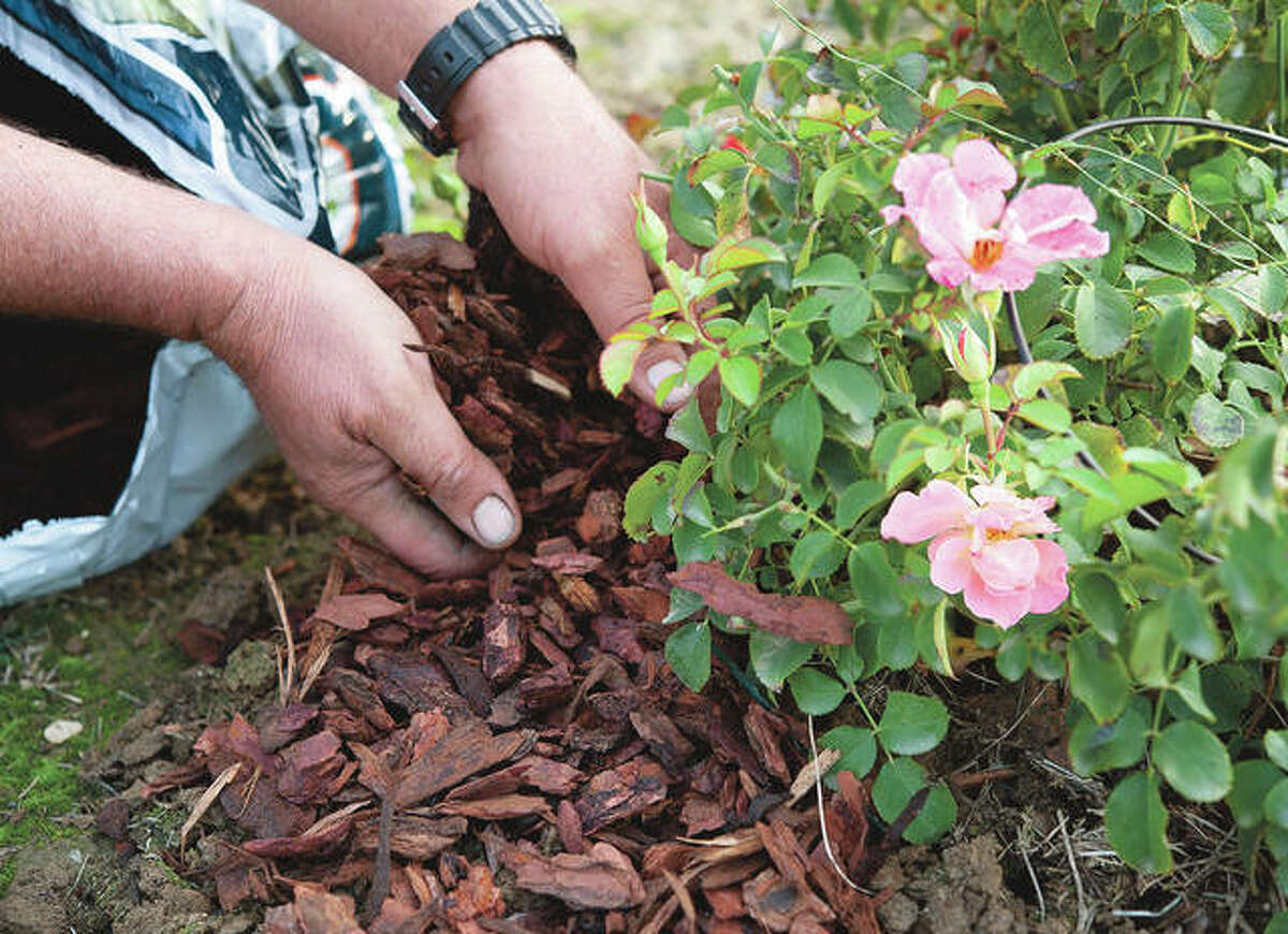 In addition to keeping weeds down, mulch will help retain soil moisture, meaning you may not have to water as often.
