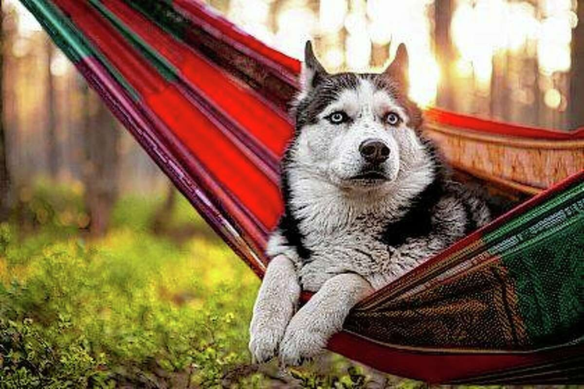 Let Dad know you realize how hard he works by buying him a hammock for Father's Day to maximize his down time.