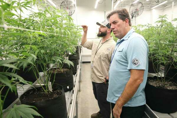 In this Nov. 29, 2018, photo CEO Morris Denton, right, inspects plants in the growing room with cultivation technician Robert Russin as employees work at Compassionate Cultivation in Manchaca, Texas. (Tom Reel/The San Antonio Express-News via AP)