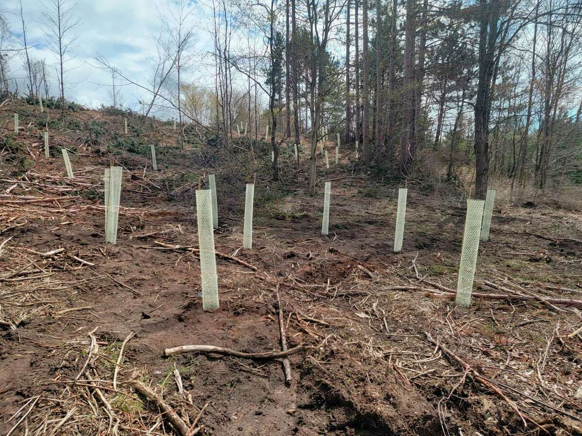 The Benzie Conservation District will be hosting a tree planting workbee at the Frankfort-Elberta Area School's forest. (File Photo)
