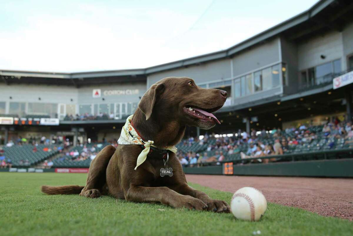 Teal is the ballpark's protector, unofficial mascot and therapist wrapped into one adorably furry package for the Corpus Christi Hooks and Whataburger Field.