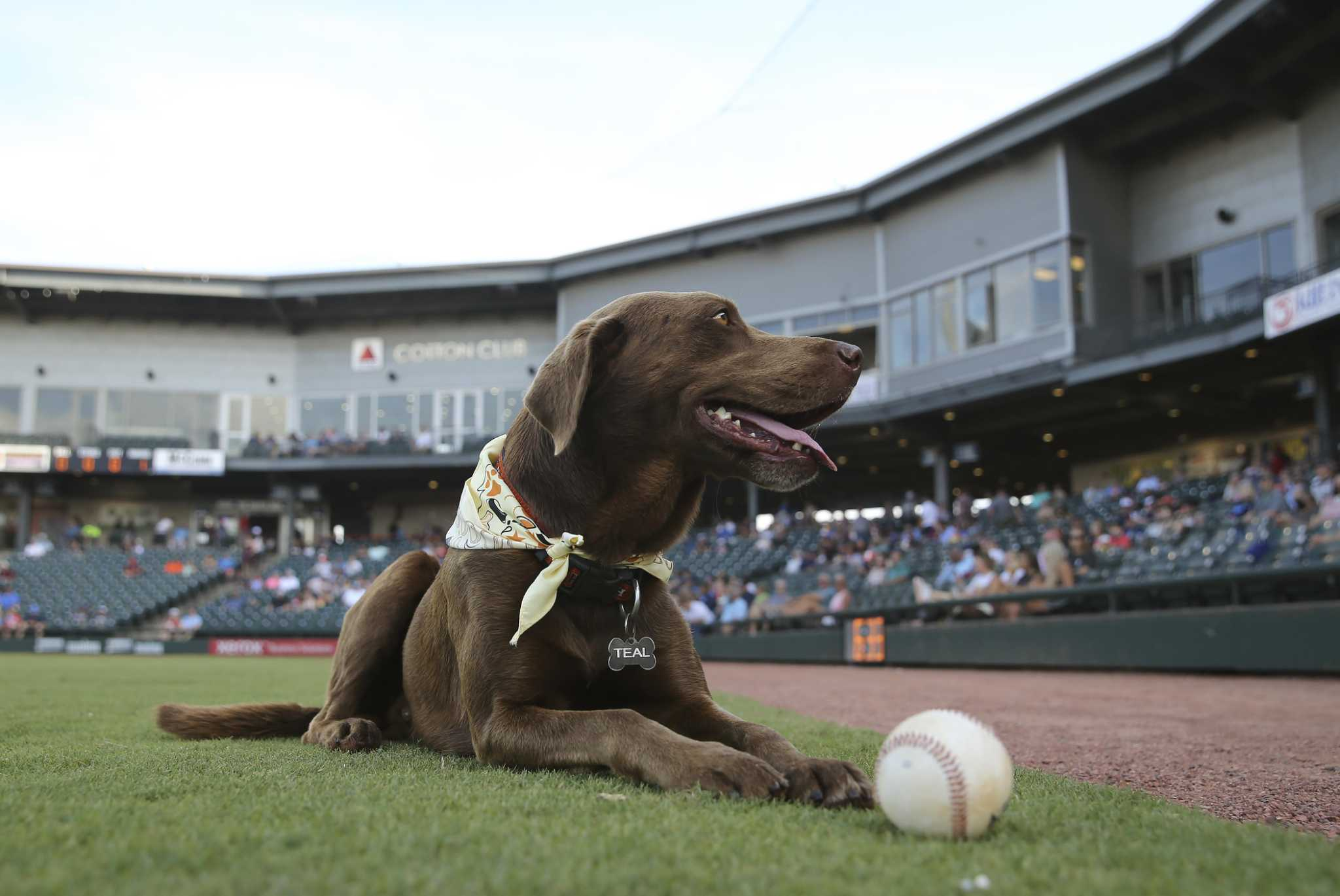 A fetching story: How a dog won the hearts of fans and players in Corpus Christi