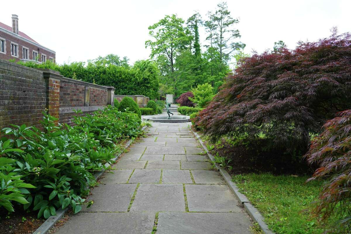 The Waveny Park Conservancy wants to remove 12 Japanese maple trees, six on either side of the fountain to put in a flower bed. Photo was taken June 21, 2021.