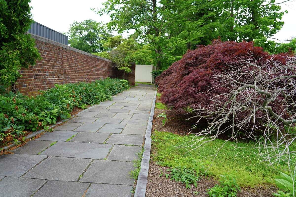 Two of the six Japanese maple trees at the edge of the walkway, on the north side of fountain have died. There are 12 of the decorative trees. Photo was taken June 21, 2021.