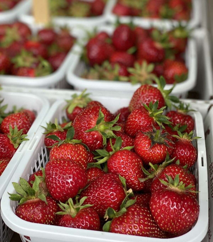 Strawberry picking season is in June.