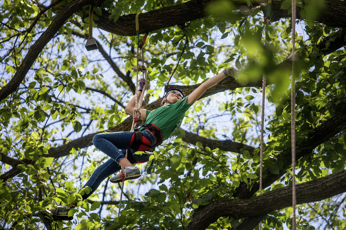 Lizzie Vanchura, 12, extends her arm to ring a bell while participating in a tree climbing event hosted by arborists at Dow Gardens Tuesday, June 22, 2021 in Midland. (Katy Kildee/kkildee@mdn.net)