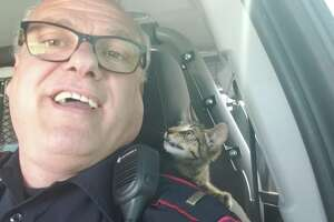 Police picked up the wayward critter soon after someone called 911.