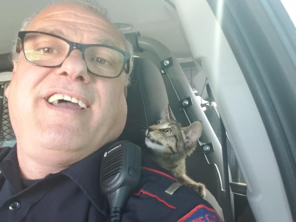 Kitten thrown from moving car on Houston highway somehow survives