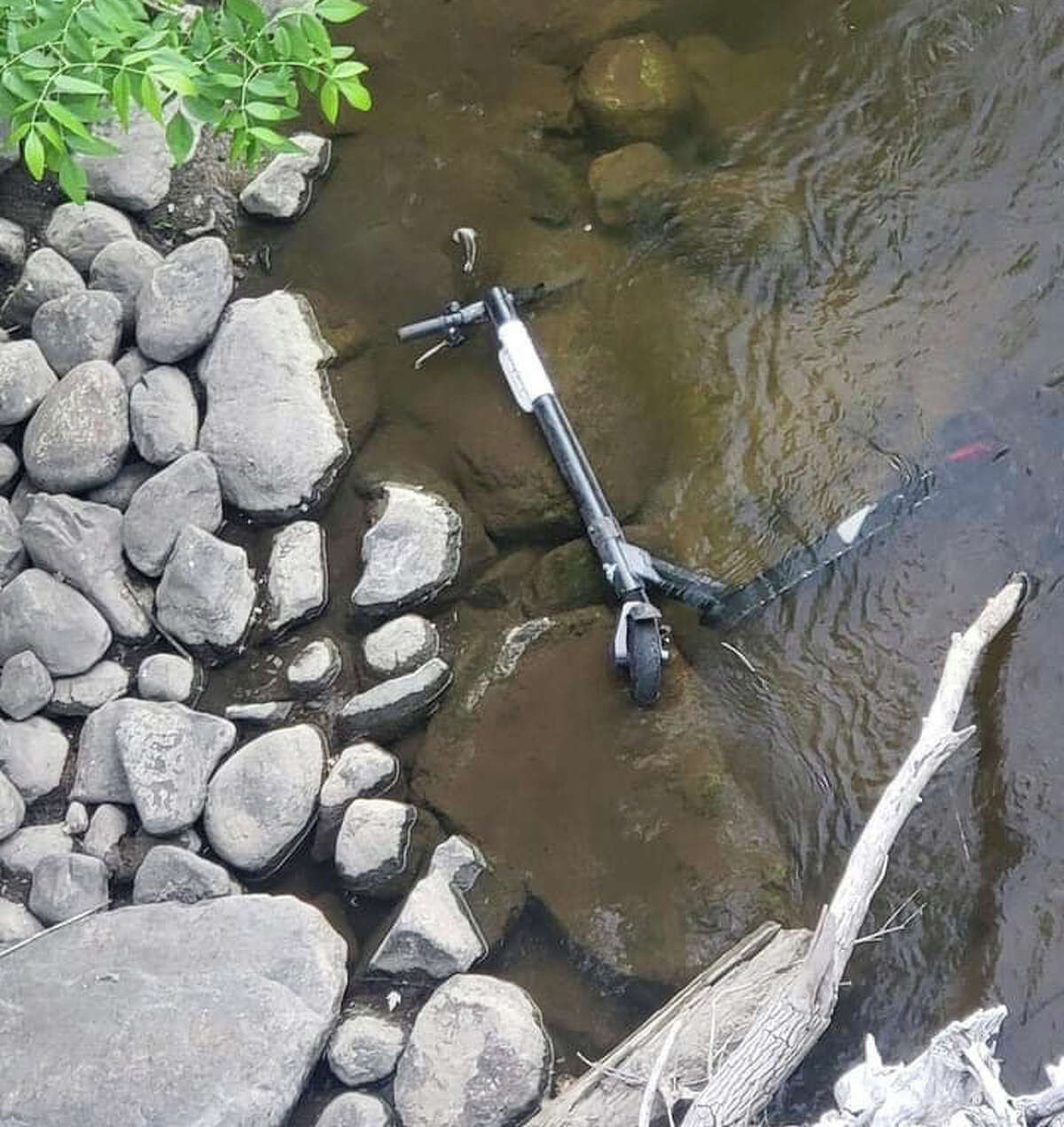 In this photo, submitted to the Pioneer, a Bird scooter is pictured in a portion of Mitchell Creek.