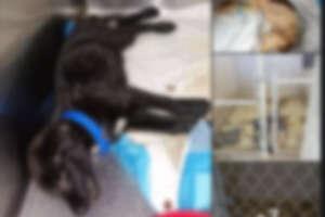 "A social media post by Priscilla ""La Gordiloca"" Villarreal went viral on Monday evening, prompting changes at Laredo Animal Care Services."