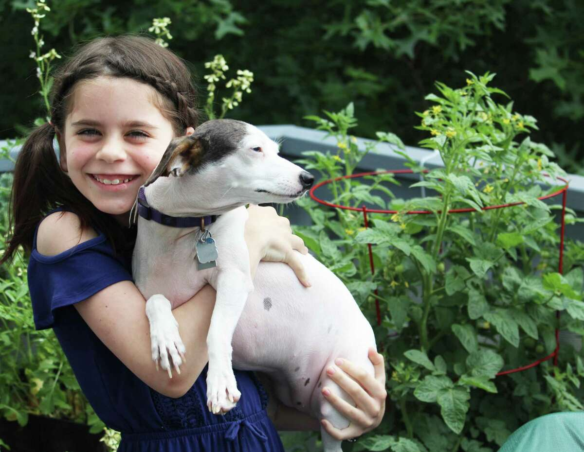 Cromwell 10-year-old Ella Tessman started baking about a year ago, during the pandemic, as a way to keep busy. Her homemade dog biscuits and training treats became so popular with neighbors that she's now running a little business called Ella's Treats. Her dog Lucy, a Jack Russell Whippet mix, is her No. 1 customer.