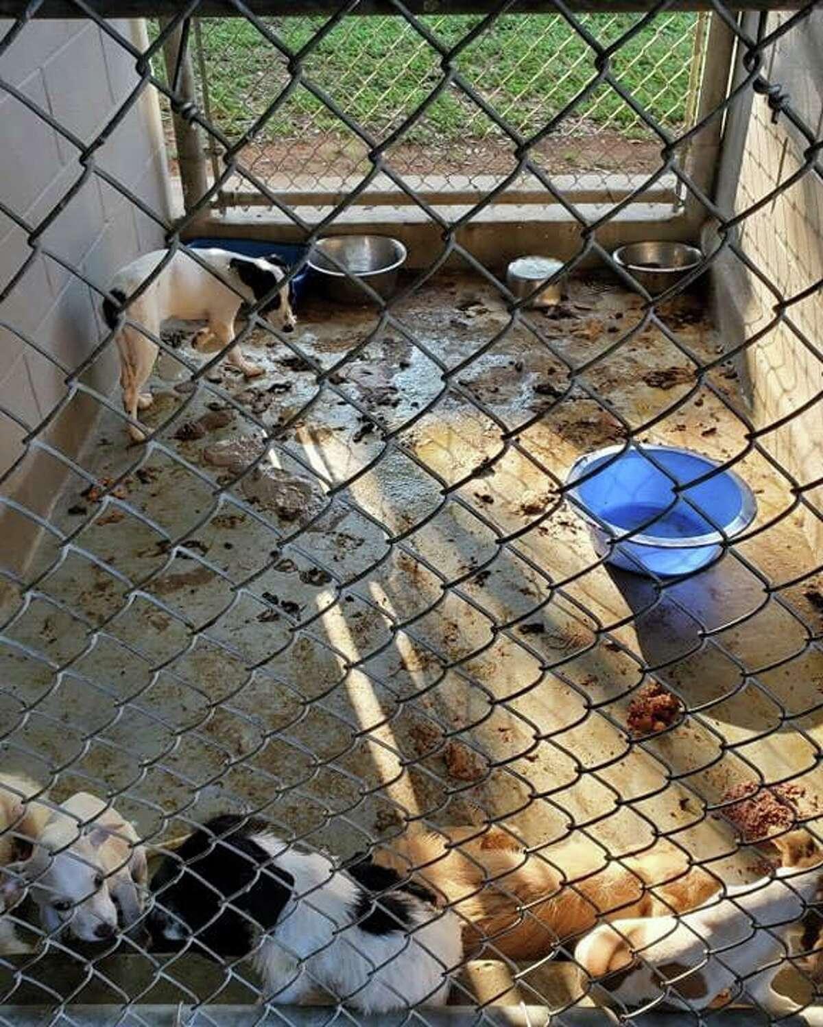 Los animales se encontraban en condiciones insalubres donde habitaban mas de uno.