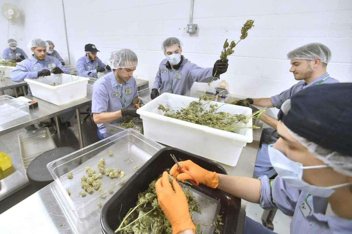 Advanced Grow Labs in West Haven, one of four medicinal marijuana cultivation facilities in Connecticut that will have an opportunity to join the recreational market.