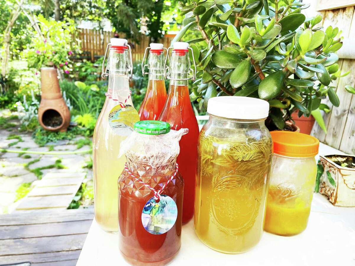 Recently, there has been renewed interest in foraging and wild fermentation. Products made from the process can include, from left, rhubarb vinegar, raisin vinegar, two types of fruit kombucha, spruce tips ferment, and mango shrub.