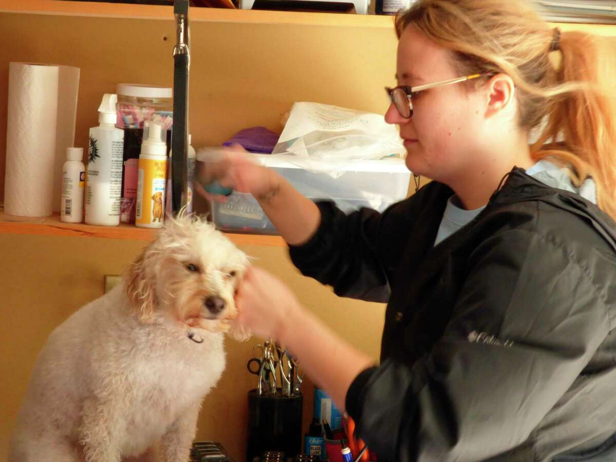 Professional groomer Kate Lippert cares for Opal a frequent customer at her dog salon. Lippert recommends frequent bathing and brushing in between visits to the groomers to keep dogs clean and healthy whilepreventing more expensive appointments. (Scott Fraley/News Advocate)