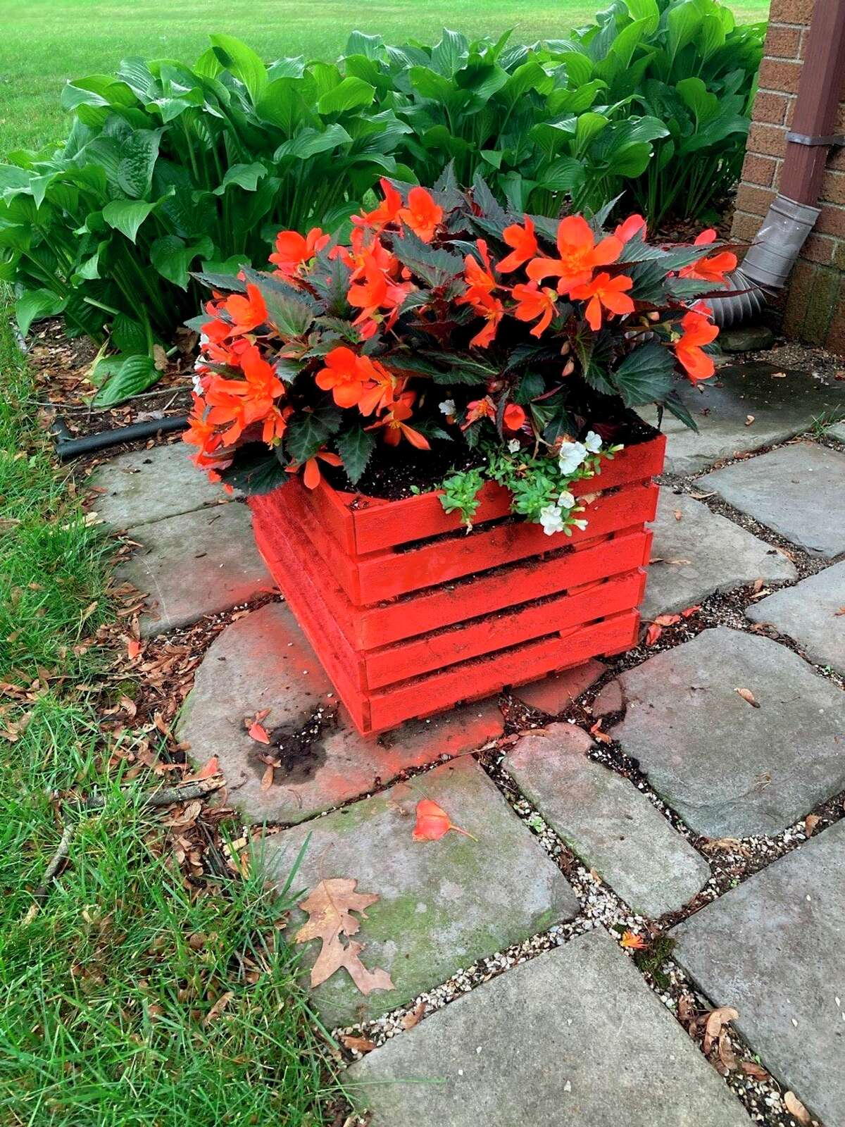 An unused wood crate, some spray paint, potting soil and a few plants make for an inexpensive and colorful planter, easily created at home. (Photo provided/Ed Hutchison)