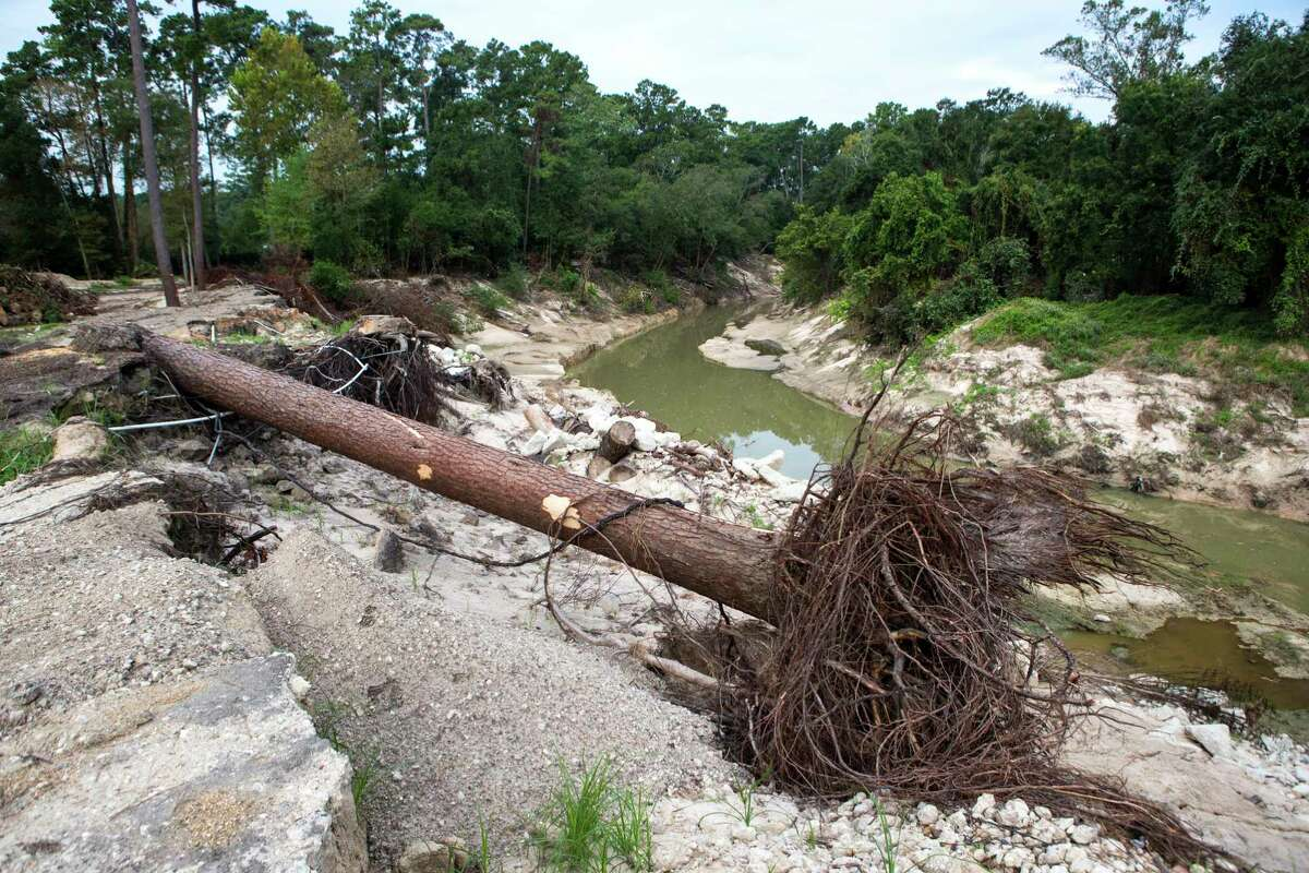 A tree, knocked down by flooding in the aftermath of Hurricane Harvey near Cypress Creek, is shown at Mercer Arboretum and Botanic Gardens on Thursday, Sept. 28, 2017, in Spring. Harvey devastated the gardens, washing away much of the foliage. ( Brett Coomer / Houston Chronicle )