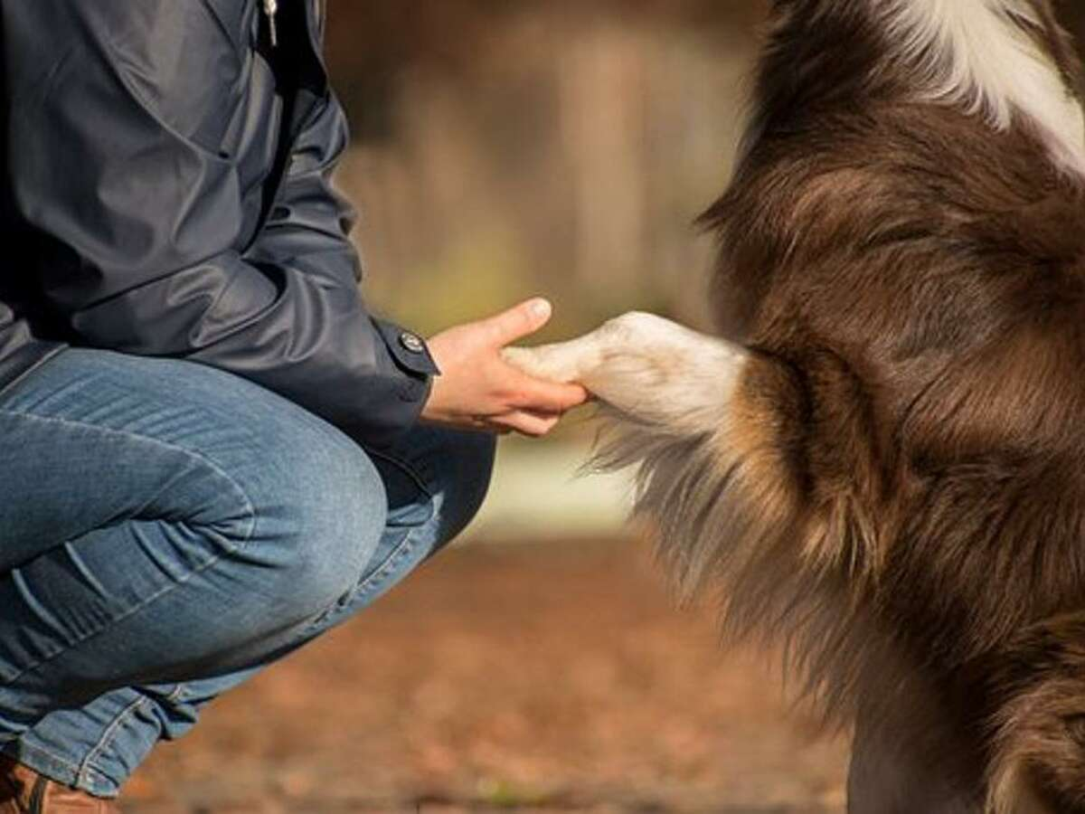 Although some pet owners may feel uncomfortable mourning an animal, Michael Hawkins with the Texas A&MCollege of Veterinary Medicine & Biomedical Sciences' Veterinary Medical Teaching Hospital said grieving is a natural response to the heartbreak associated with this kind of loss.
