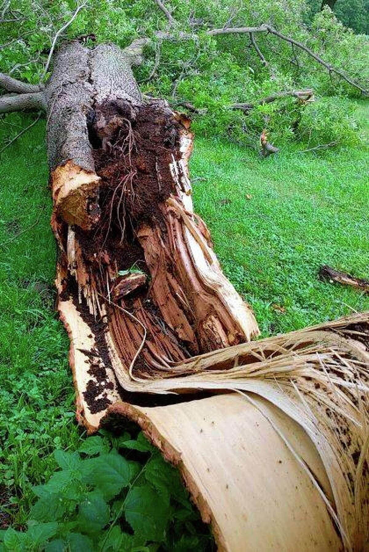 Gusty winds caused tree limbs to fall at Ebaugh Park near Winchester.