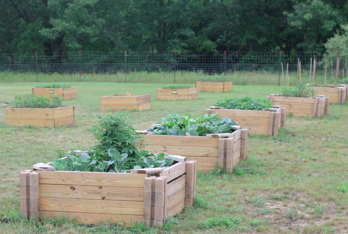 Participation in the veteran community garden program grew by around 50% in 2021, whichled to the creation of five new raised garden beds. (Kyle Kotecki/News Advocate)