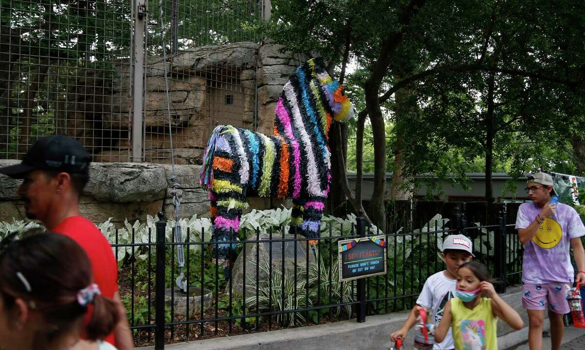 A giant animal piñata is on display at a fiesta event highlighting the San Antonio Zoo's conservation efforts in Latin America and educating guests on the animals native to Latin America on Sunday.