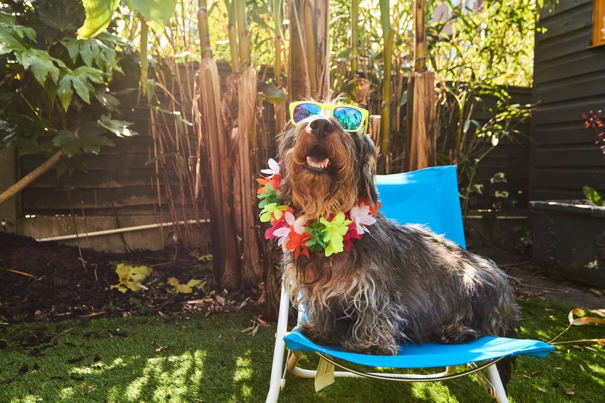 Here's how to keep your pets safe this summer in Houston.