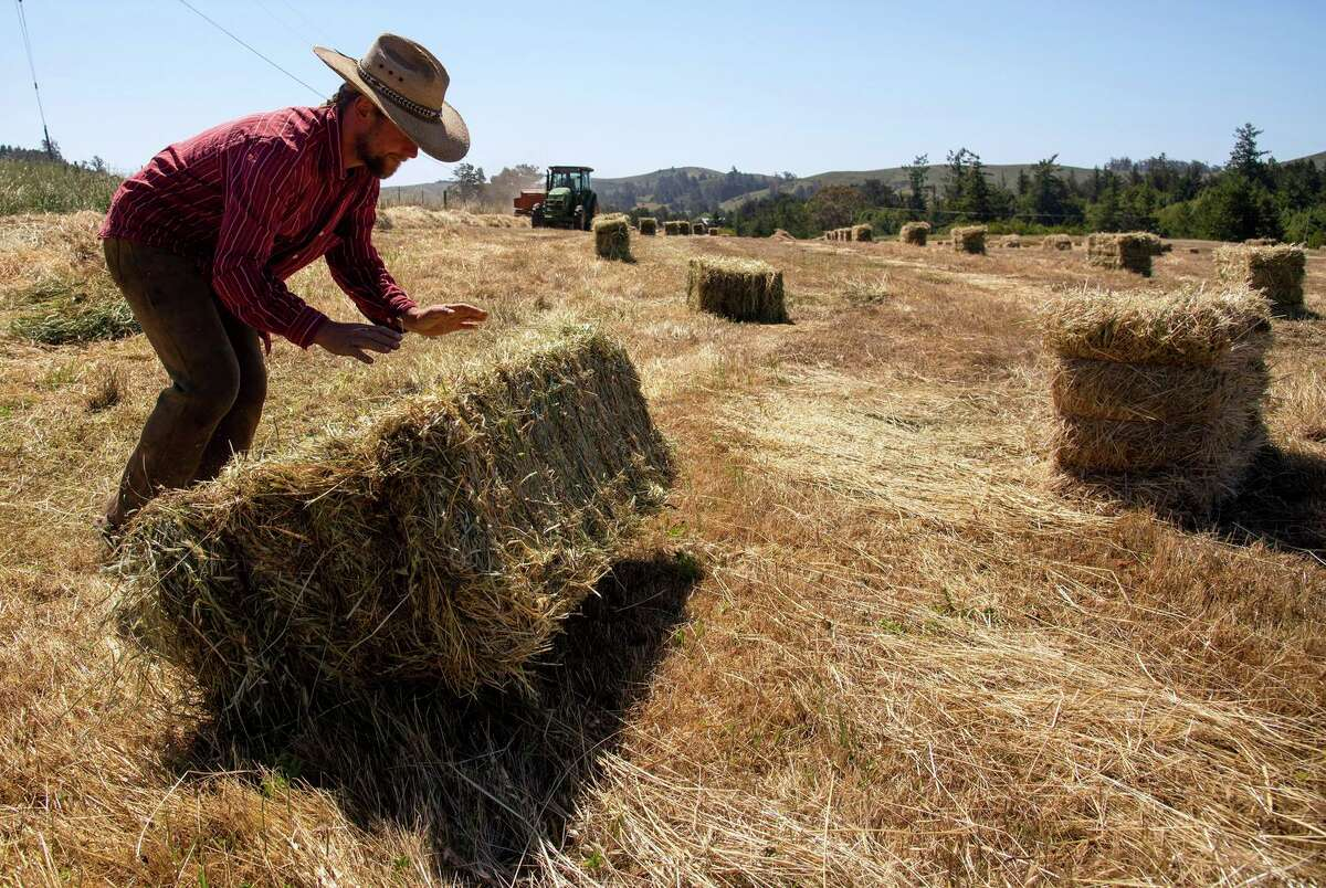 Co-op rancher Jay Silwa rolls a hay bale out of the path of dairyman Steve Perucchi as he approaches in the tractor with a hay baler at Bodega Pastures, a cooperative pasture-raised sheep farm in Bodega.