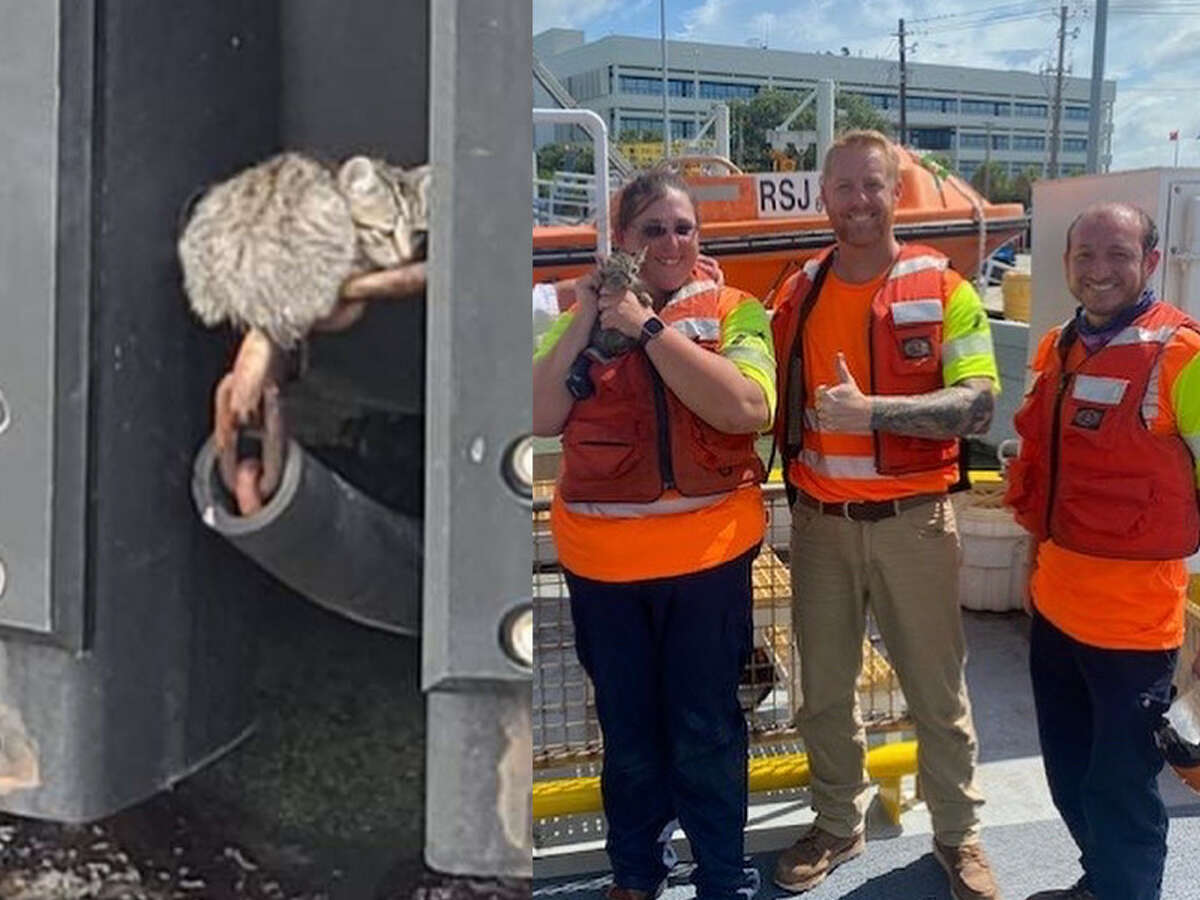 Miguel, AKA Miggy, was rescued by Galveston ferry crewmembers Wednesday.