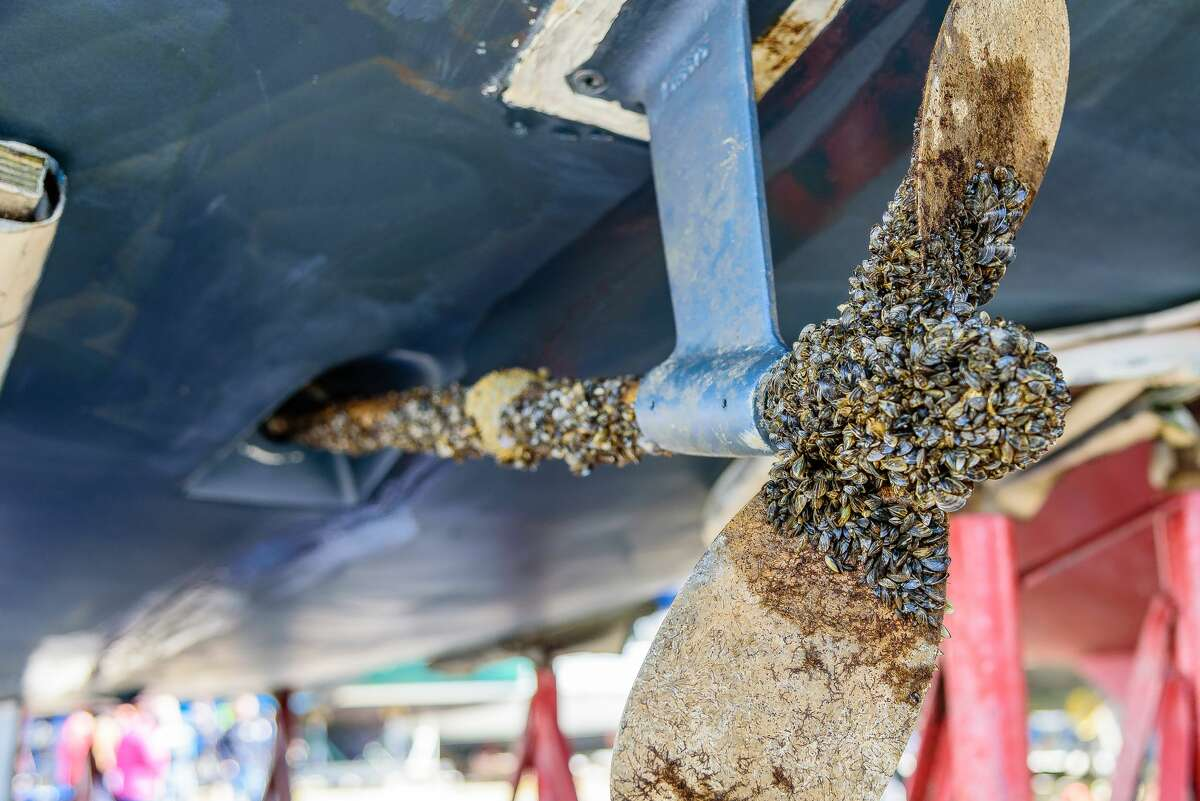 Zebra mussels on a 36 foot sailboat.