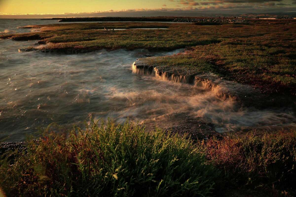 The rising tide washes up against pickleweed and rocks on the Hayward shoreline.