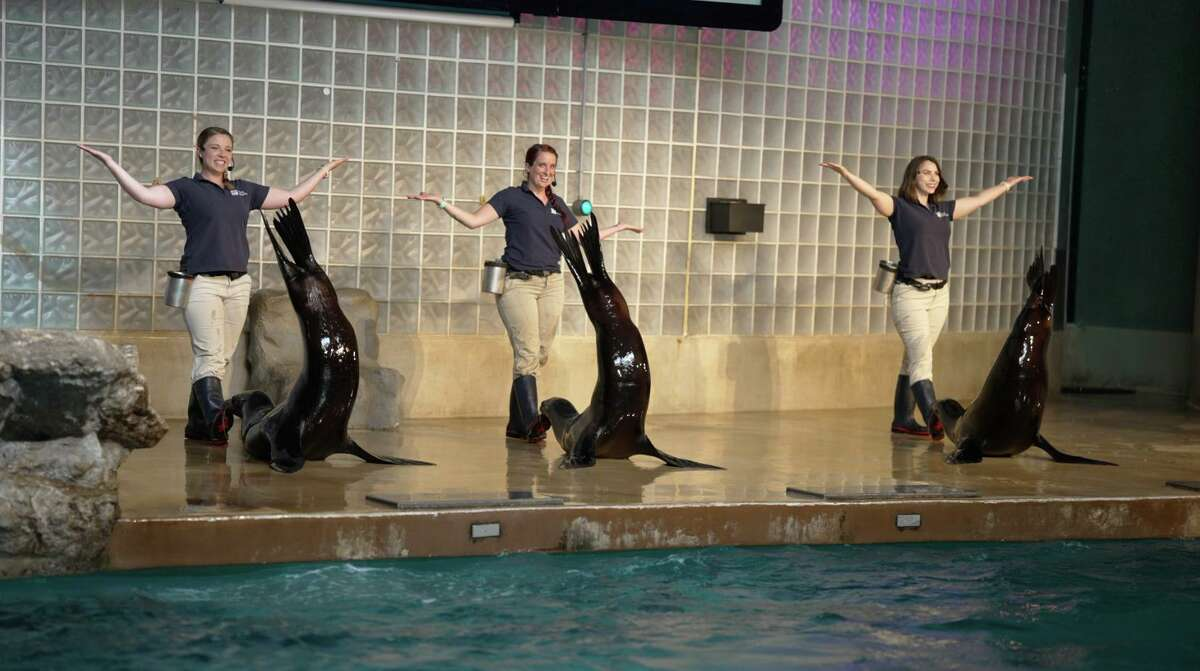 Mystic Aquarium staff pose with sea lions as part of the new show just unveiled at the Foxwoods Marine Theater.