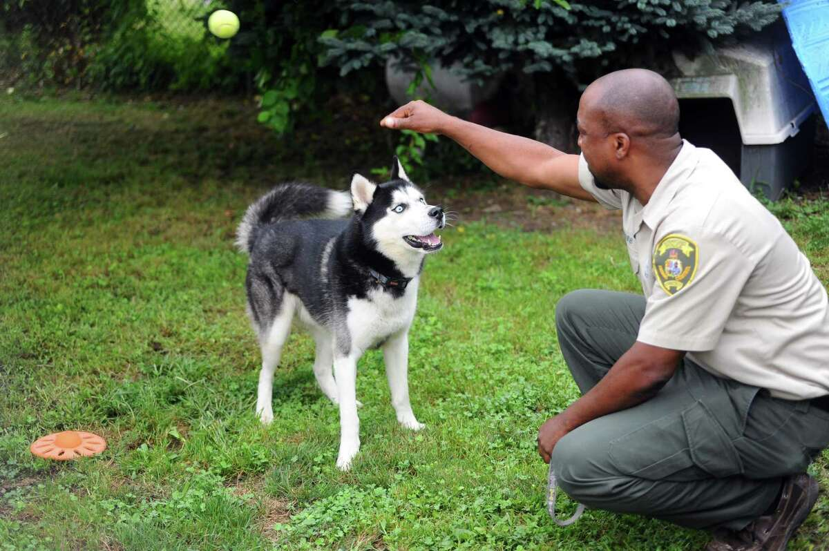 A dog new to the Stamford Animal Control Center plays with Stamford Animal Control Officer Tilford Cobb in Stamford, Conn. on Tuesday, August 15, 2017.