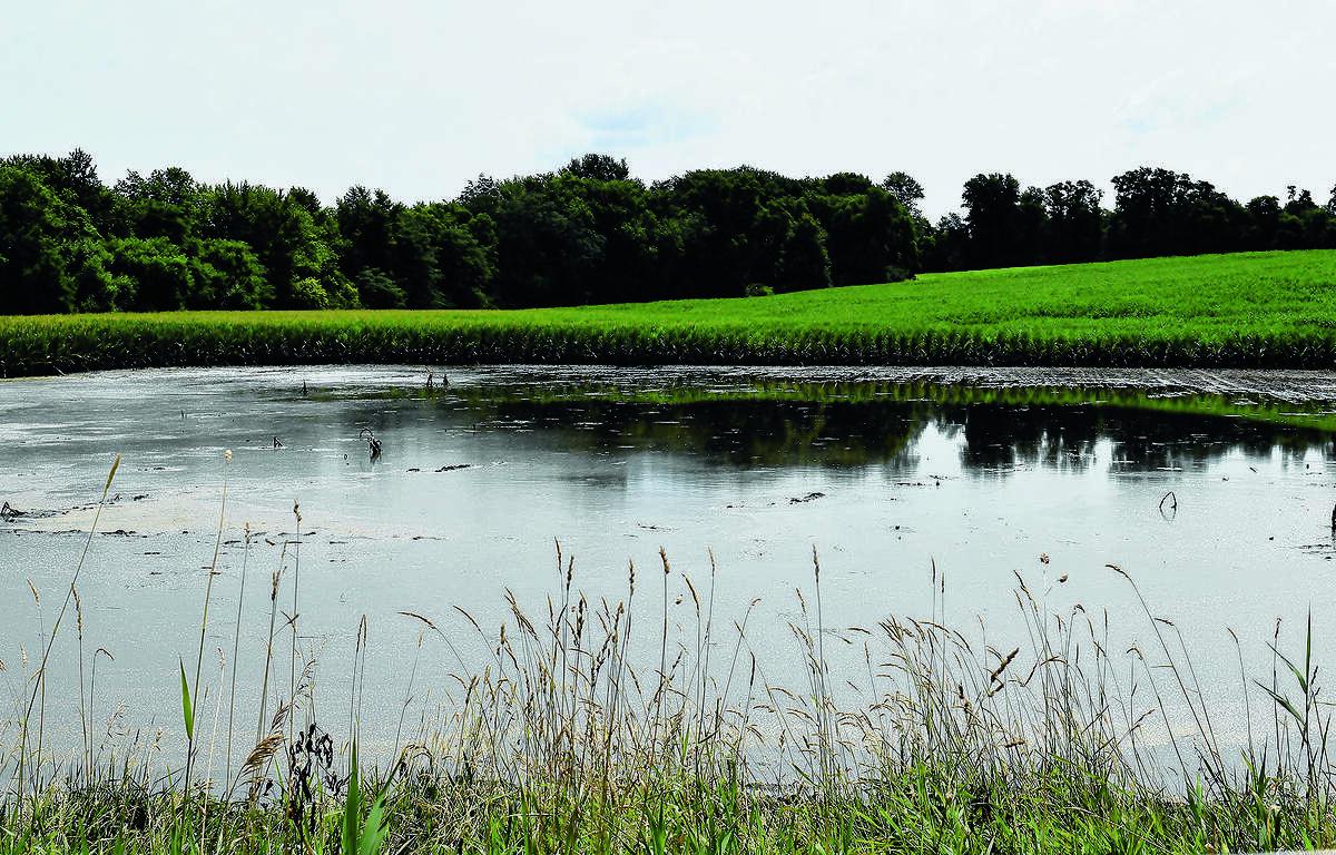 A low-lying field holds water following heavy rains.