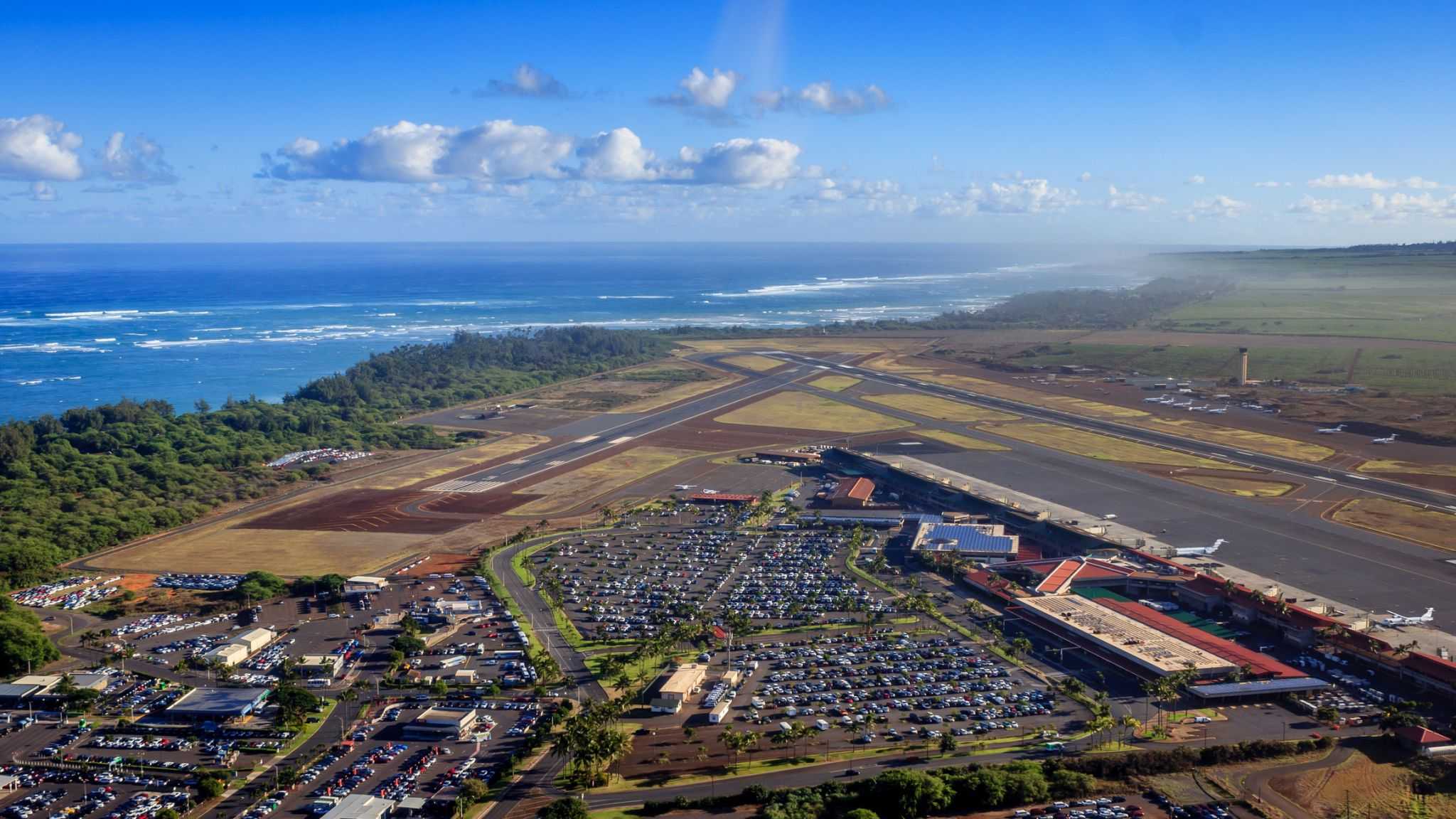 Bird on a plane causes commotion aboard flight from Hawaii