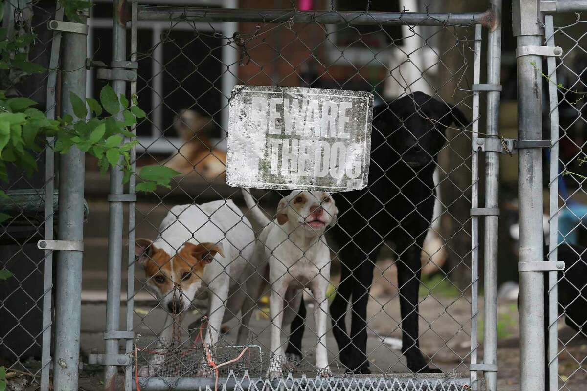 """Dogs guard their East Side home. """"They see us as a threat because we are going into their territory,"""" postal worker Jesse Colunga says."""