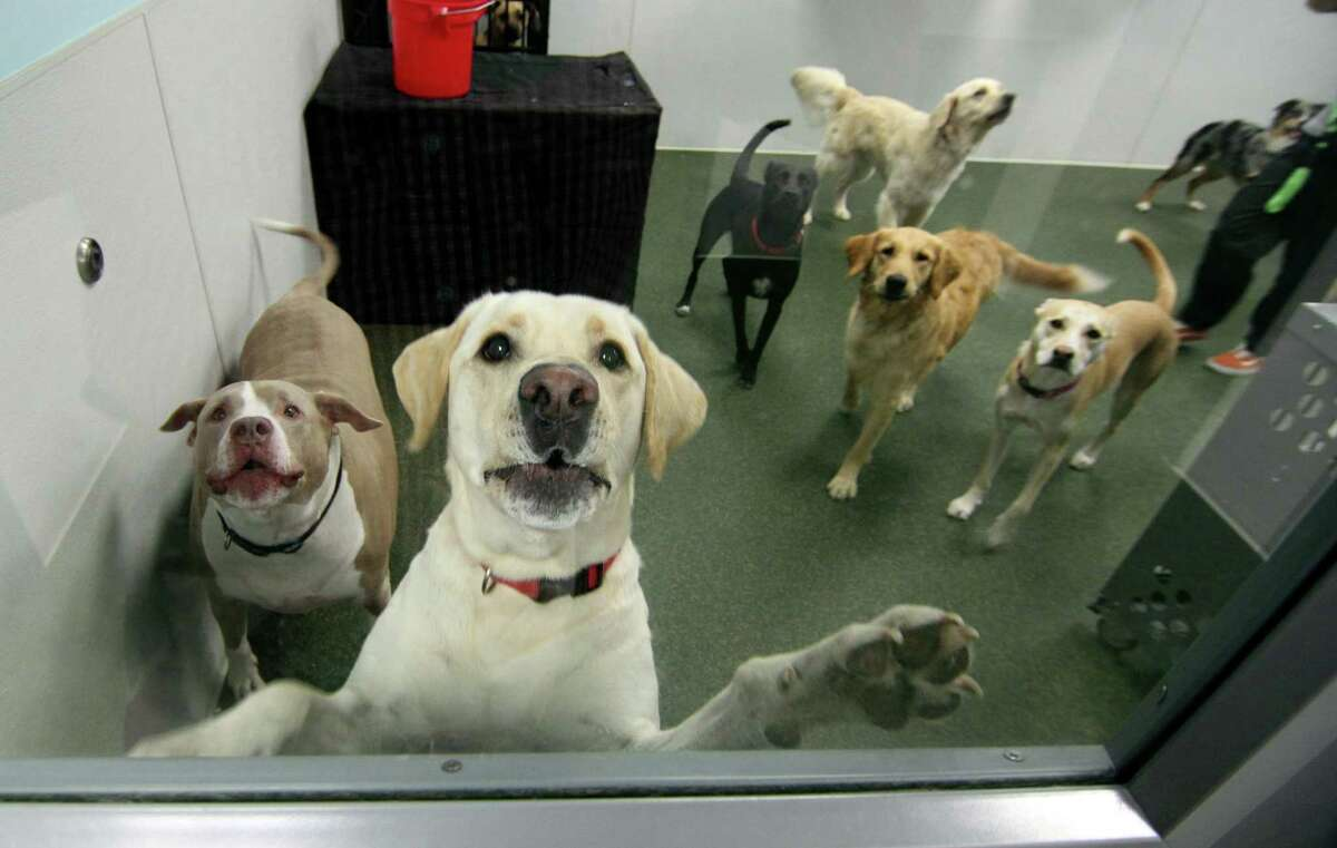 Dogtopia in Stamford, Conn., on Thursday July 1, 2021. Pandemic puppies were all the rage over the last year, but with the masses heading back to work and vacation season upon us, dog daycare Dogtopia is taking up the slack.