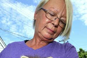 Eunice Demond of Little Rascals Rescue and Rehabilitation holds a six-week-old raccoon behind her home in Guilford on July 1, 2021, that was found wandering in a road in East Haven.