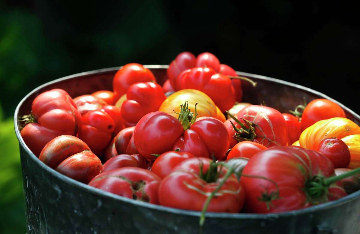 It is time to transition from the spring tomato crop to the fall tomatoes.
