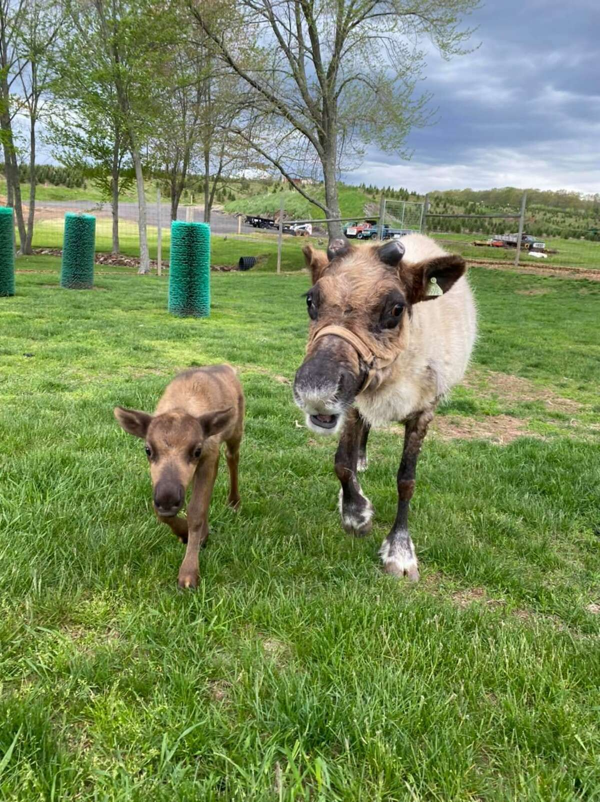 Rudy, left, was born at the South Windsor, Conn., farm on April 18, 2021.