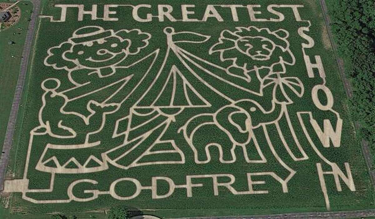 The theme or this year's Godfrey maze is circus based. This is what the maze is expected to look like when the corn is fully grown in August.