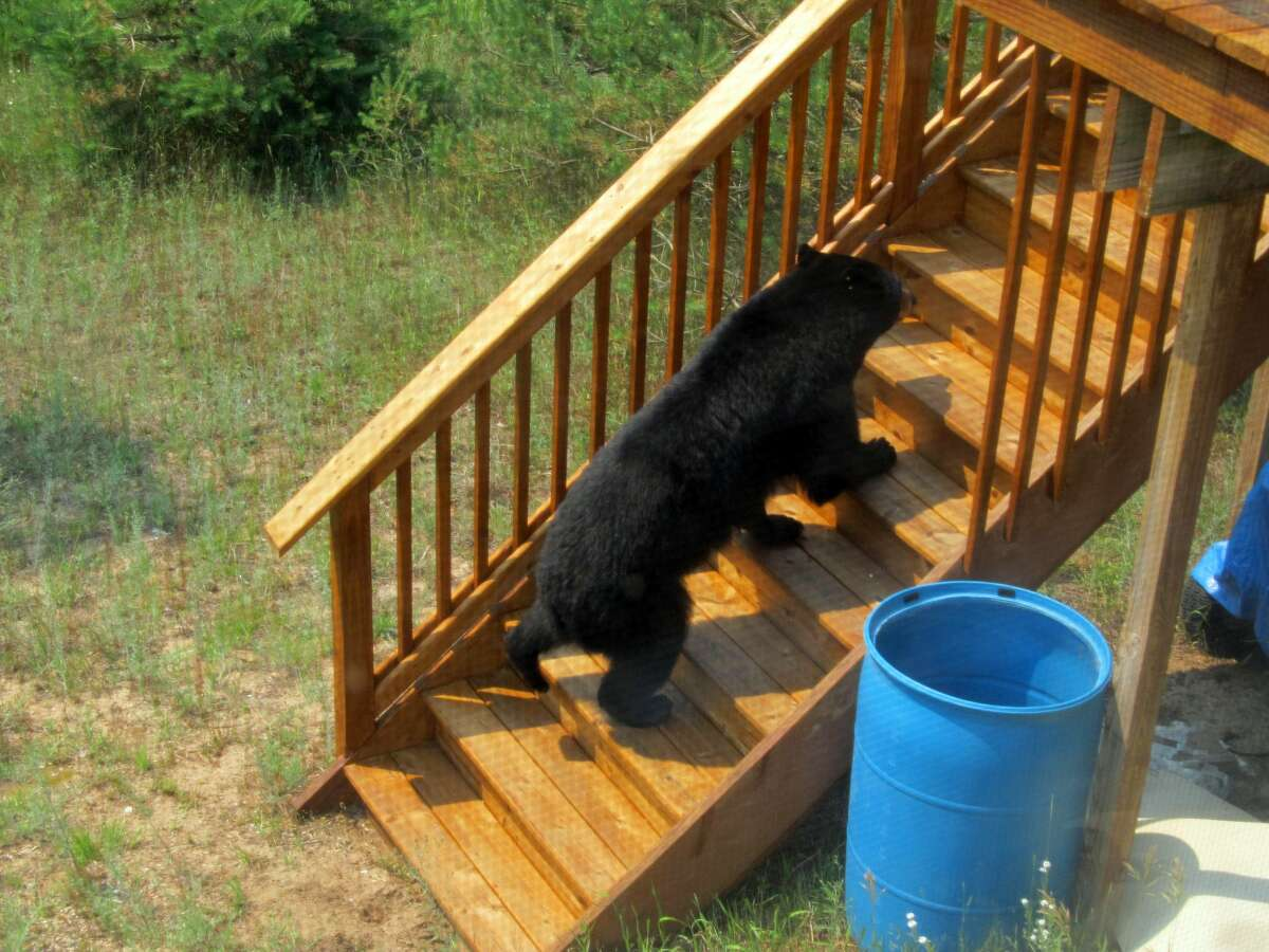 The bears eventually made their way to the couple's deck in the back of the house.